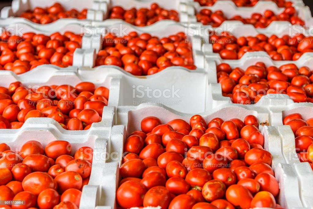Tomatoes for sale stock photo
