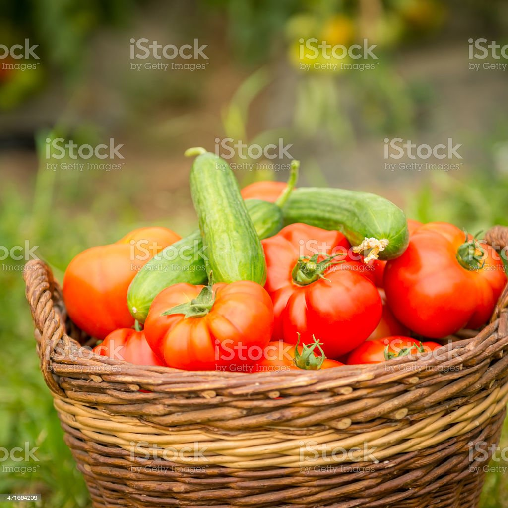 Tomatoes in Woven Basket royalty-free stock photo