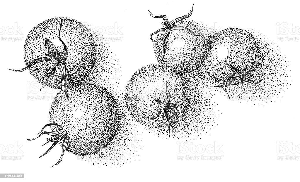 Tomatoes - inkdrawing royalty-free stock photo