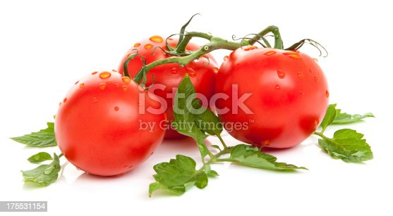 Fresh wet tomatoes on a vine isolated on a white background.