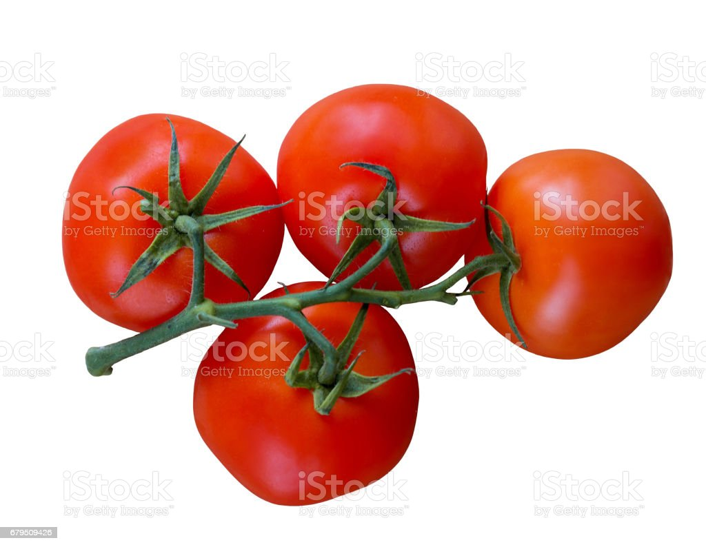 Tomatoes on a white background royalty-free stock photo