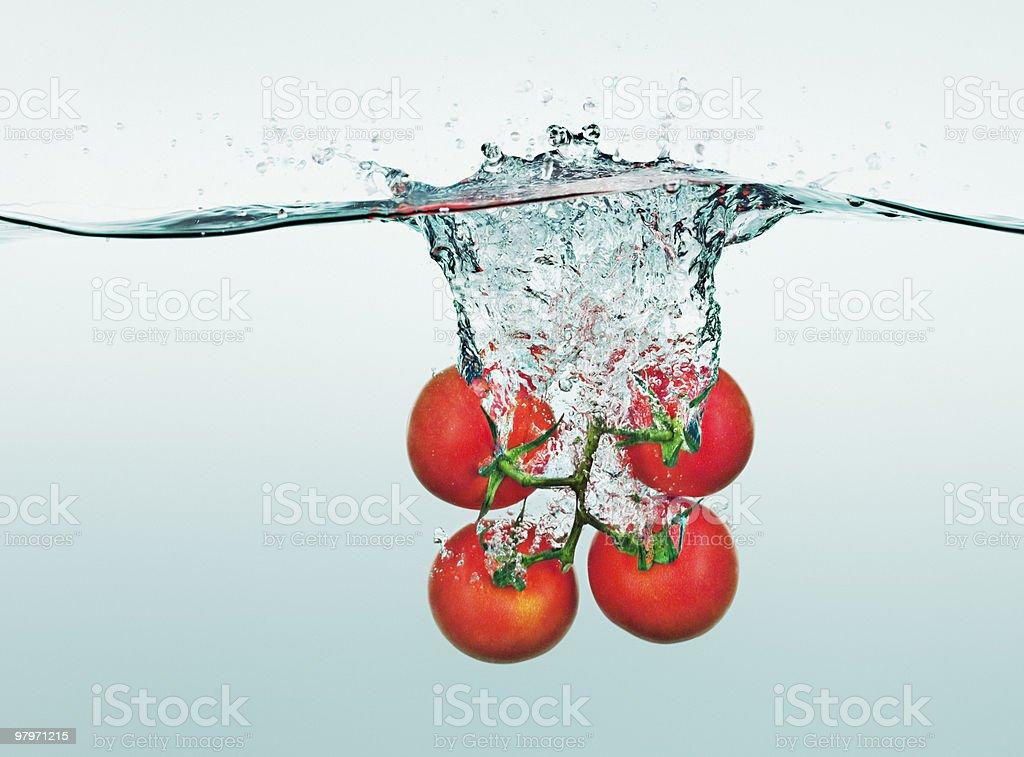 Tomatoes on vine splashing in water royalty-free stock photo