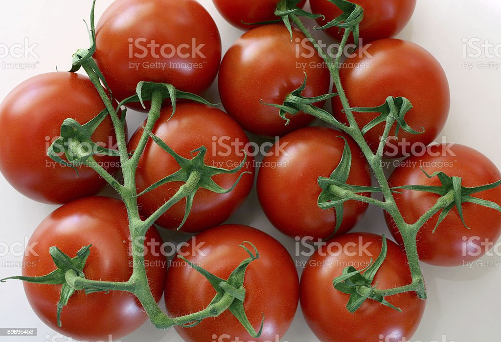 Tomatoes on Vines stock photo