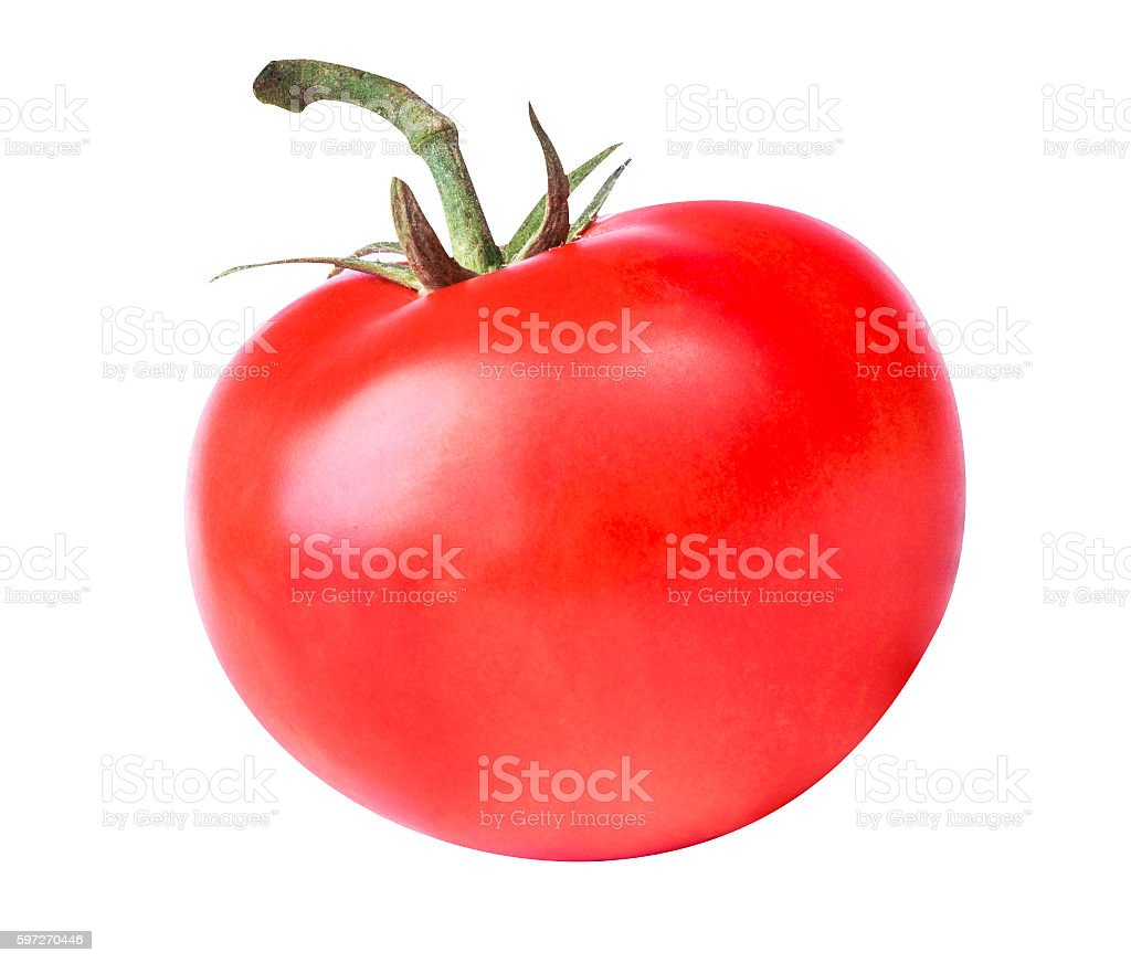 tomatoes on white background royalty-free stock photo
