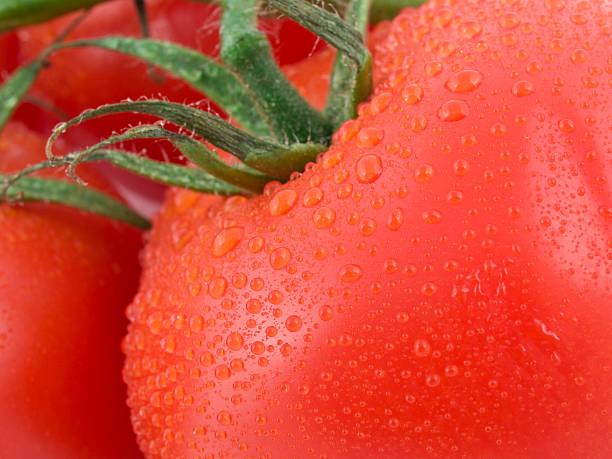tomatoes - xxmmxx stock photos and pictures