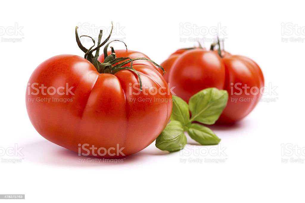 tomatoes with basil stock photo