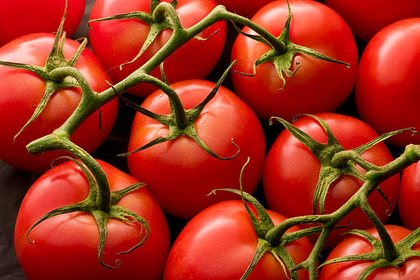 Tomatos on Vine stock photo