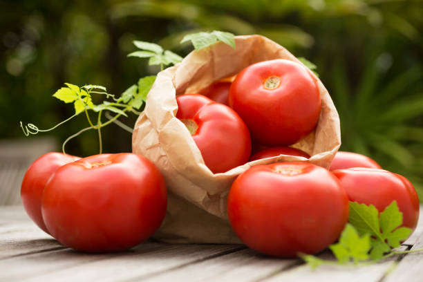 tomates à l'extérieur - tomate photos et images de collection
