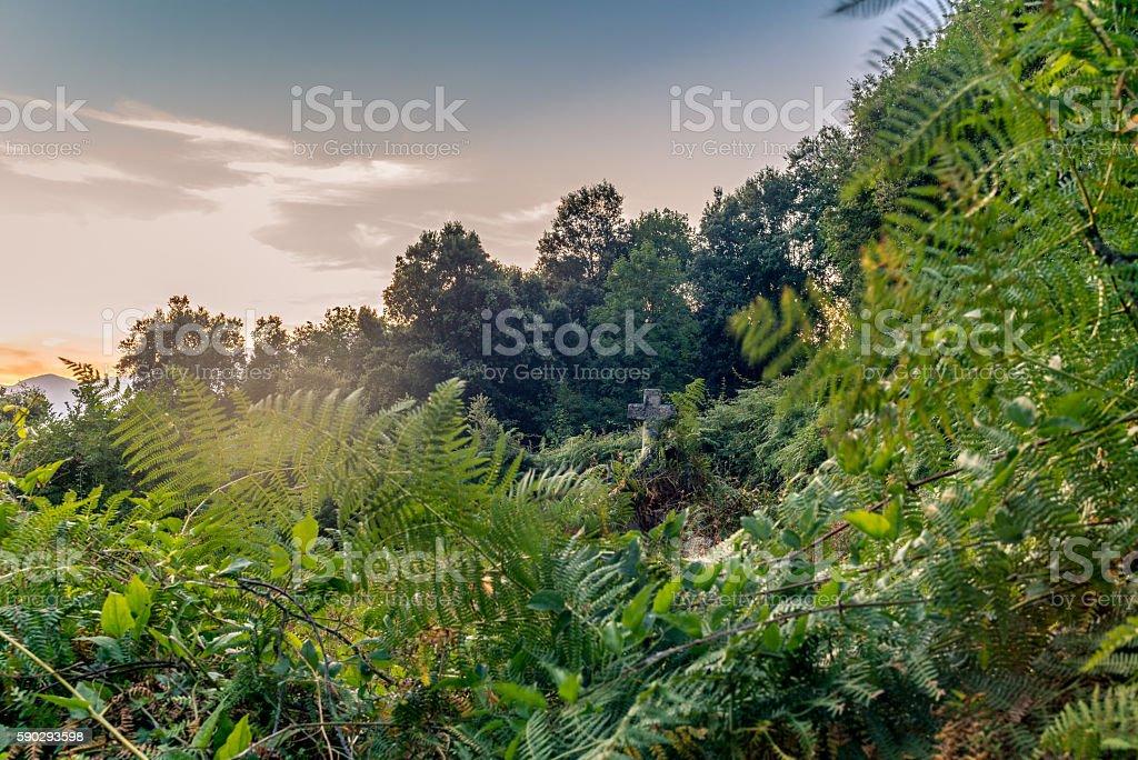 Tomb in the middle of the wild vegetation in Corsica royaltyfri bildbanksbilder