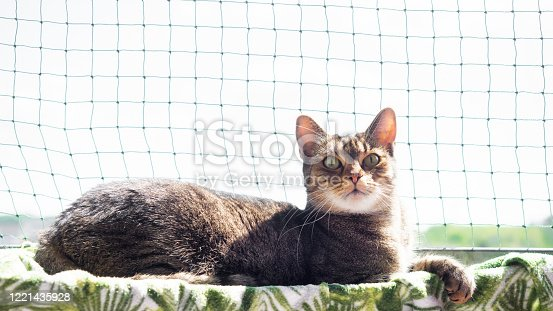 Young tomcat resting on a balcony in front of the cat net