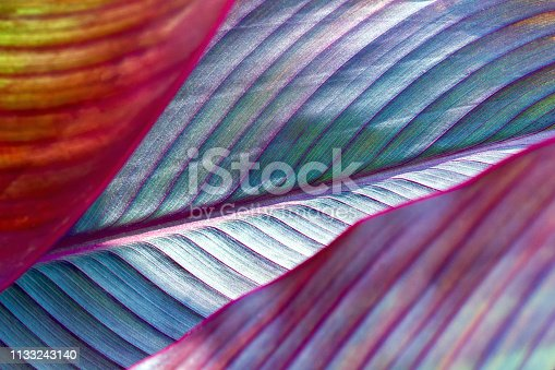 tonTropical leaves set in neon, fluorescent colors, banana