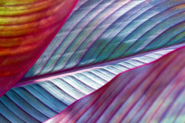 toned image of fresh palm leaf, banana. - natureza close up imagens e fotografias de stock