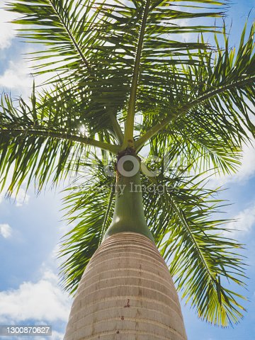 Toned photo of high tropical palm against clear blue sky