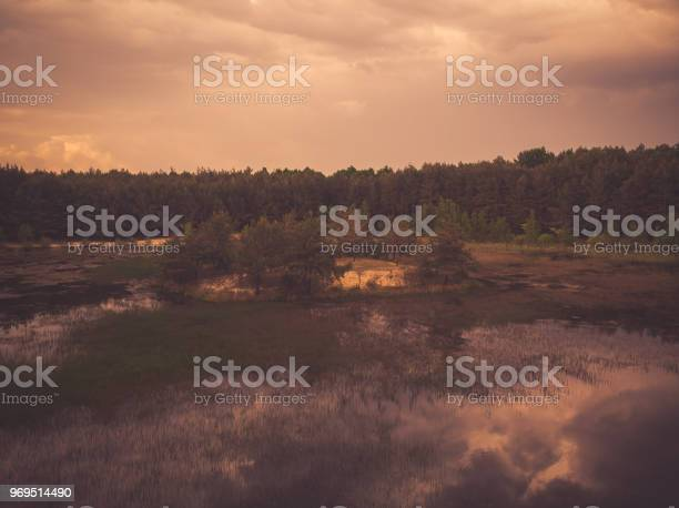 Photo of Toned image of wild lake in forest