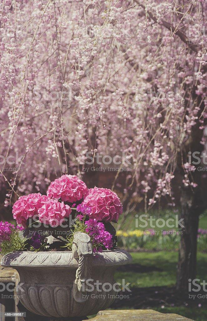 Imagen virada de relleno hydrangeas y cerezos en flor - Foto de stock de Aire libre libre de derechos