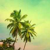 istock Toned tropical palm trees on sunny fantastic sky 894021196