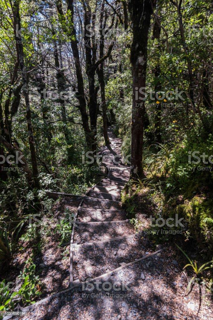 Tongariro National Park - Forest stock photo