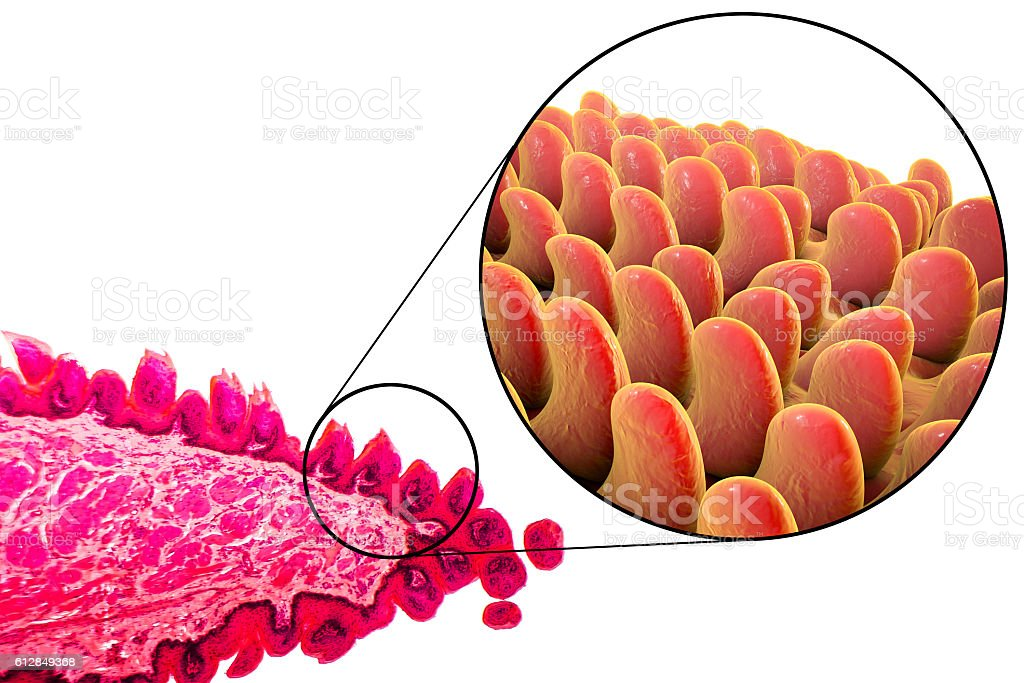 Tongue Papillae Illustration Stock Photo More Pictures Of Anatomy