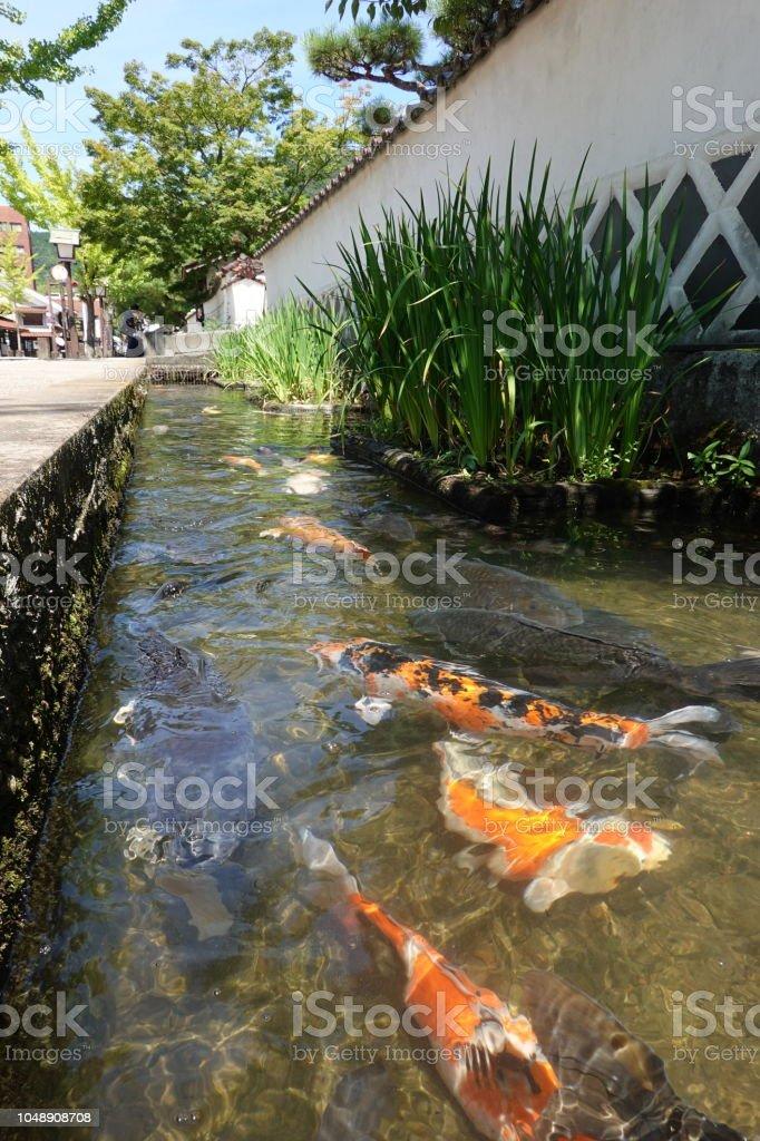 殿町通りと島根県津和野町の鯉。 ストックフォト