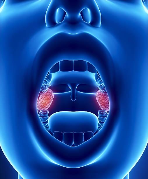 Tonsils Anatomie – Foto