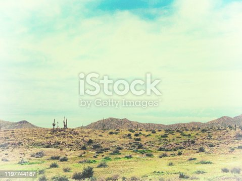Tonto National Forest, Arizona: Vintage-Style Bleached Saguaro Landscape. Copy space in the sky.