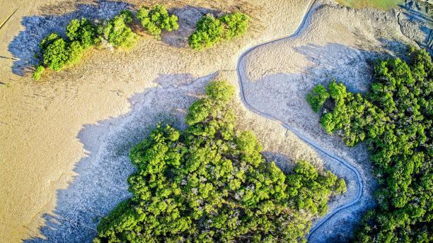 Tooradin Mangroves stock photo