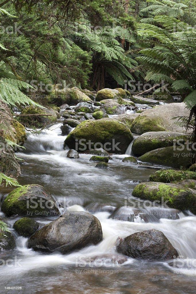 Tooronga Falls located in Victoria, Australia stock photo