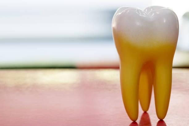 anatomie van de tand. - dentine stockfoto's en -beelden
