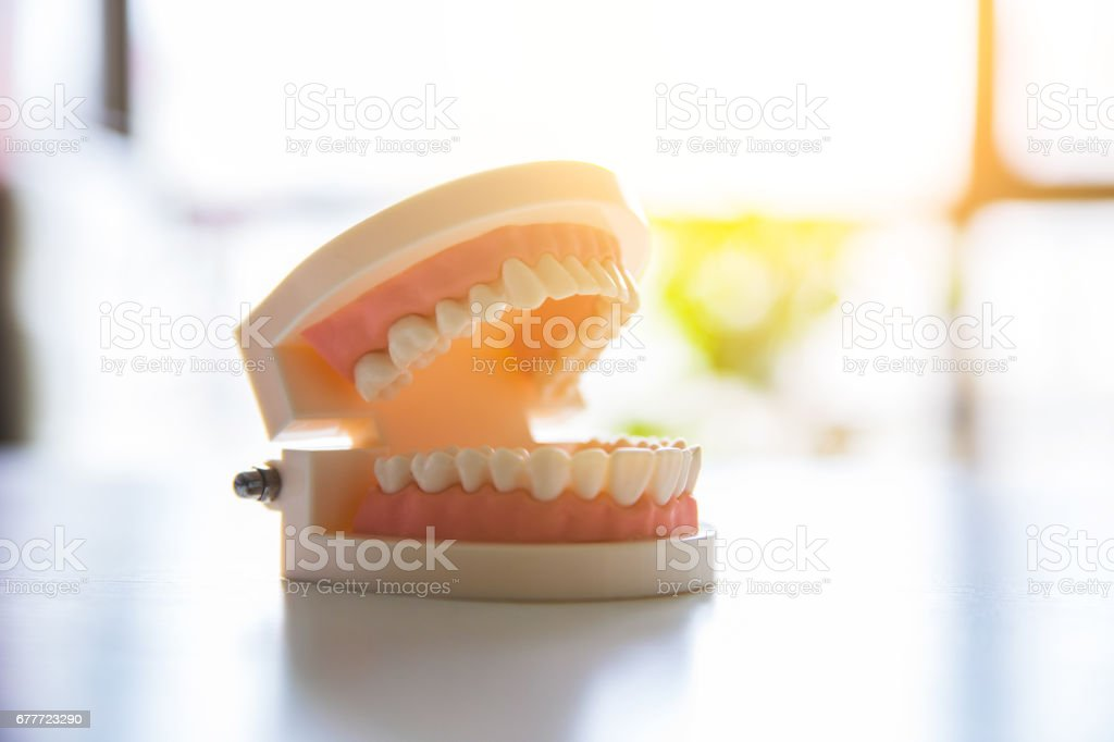 Tooth mold on table stock photo