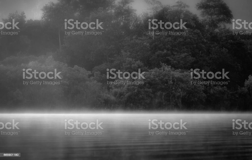 Fog foto stock royalty-free