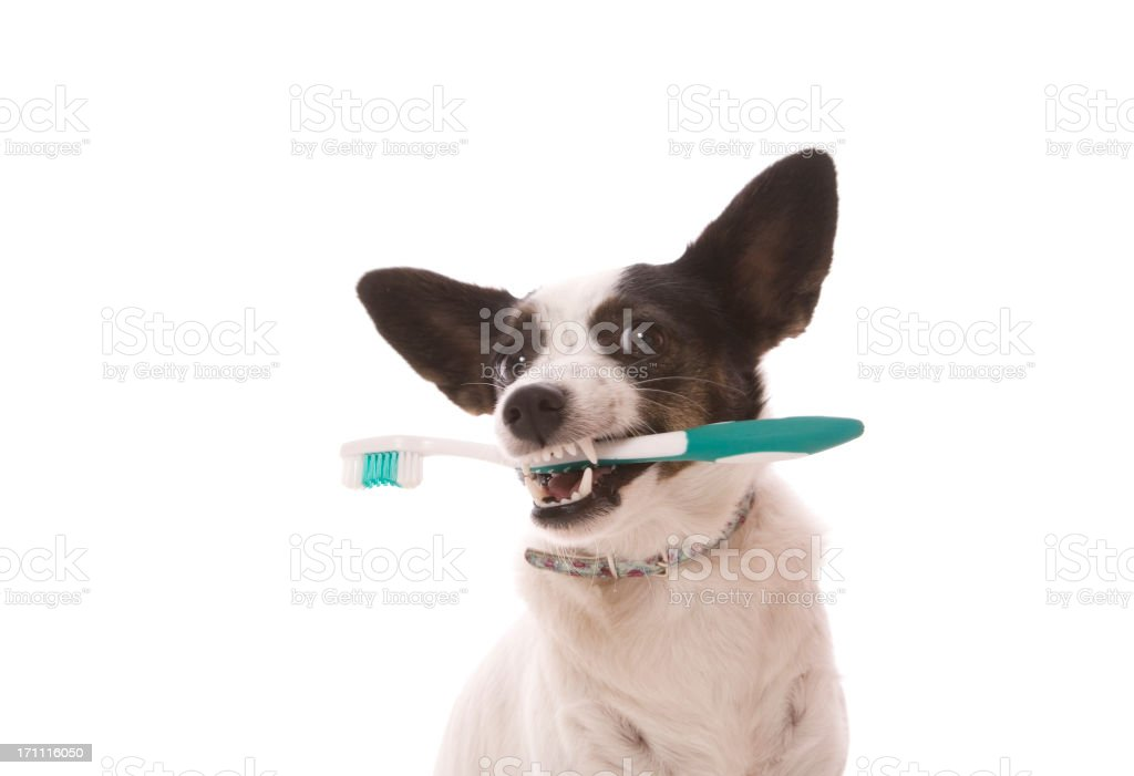 Toothbrush Dog stock photo