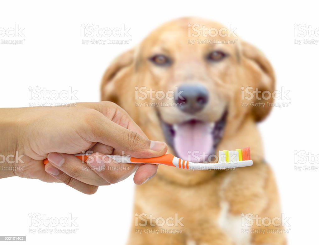 toothbrush for dogs stock photo