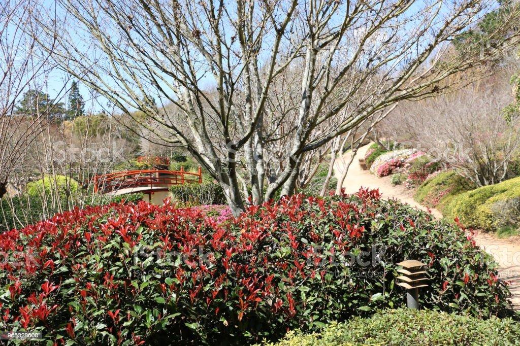 Toowoomba Japanese Gardens in Winter zbiór zdjęć royalty-free
