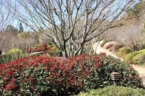 Toowoomba Japanese Gardens In Winter - zdjęcia stockowe i więcej obrazów Australia