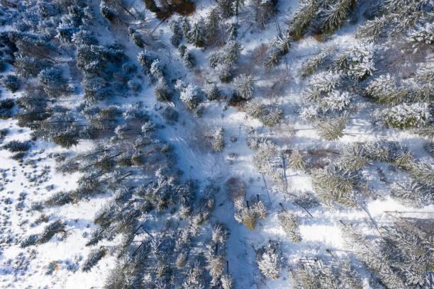 Top-Luft-Drohnenansicht zum verschneiten Fichtenwald im österreichischen Winter – Foto