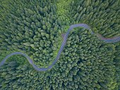 istock Top aerial view of summer mountain landscape with trees and road. Oregon, Washington, USA.  Aerial view of a road in the middle of the forest. 1189086751