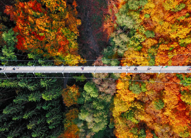 Top Luftaufnahme der Hängebrücke Geierlay (Hangeseilbrucke Geierlay) in der Nähe von Mosdorf, Deutschland – Foto