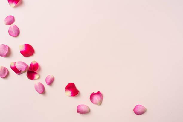분홍색에 빨간 장미 꽃잎의 상단 클로즈업 보기 - 꽃잎 뉴스 사진 이미지