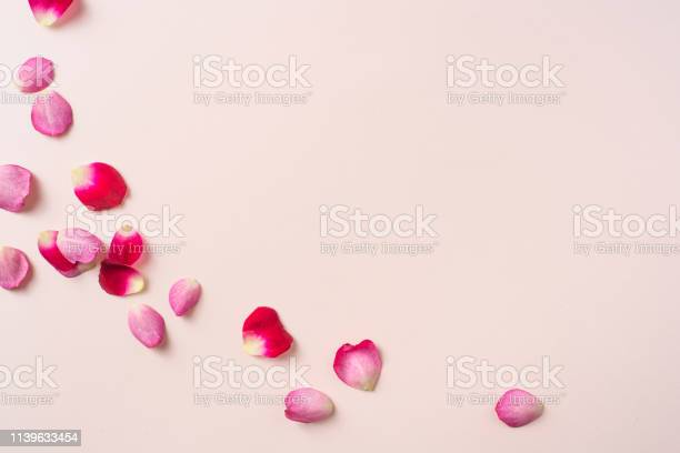 Photo of top close up view of red rose petal on pink