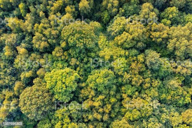 Photo of Top down aerial view of deciduous trees in forest in warm sunlight