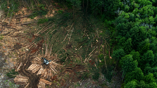 Top Down Drone Shot of Felled Trees in Logged Area of Forest