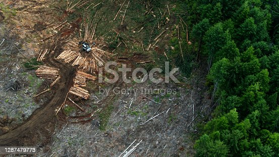 Aerial photograph of logging clear cuts in the forest near Yachats in Lincoln County, Oregon.
