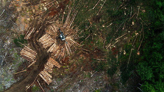 Top Down Drone Shot of Harvesting of Felled Trees in Logged Area of Forest