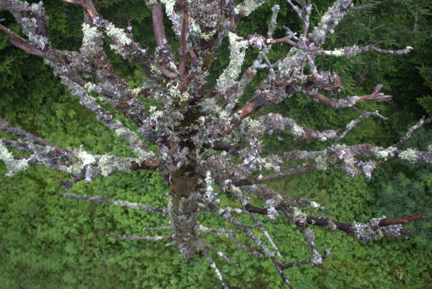 Top down view of tree at top of Clingmans Dome, Tennessee stock photo
