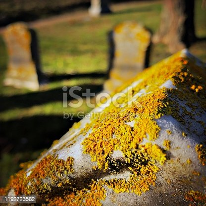 Top of a Tombstone with Lichen