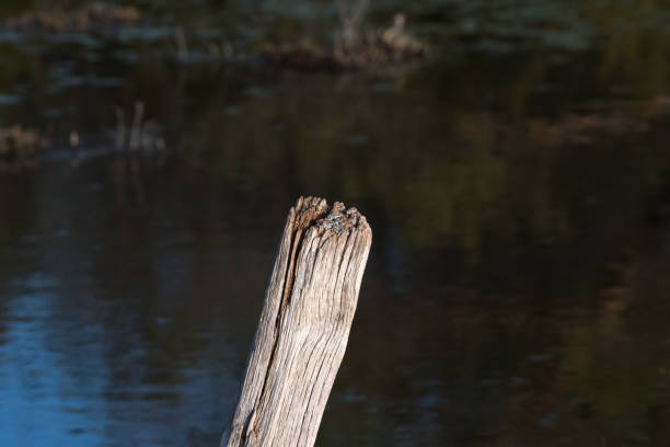 Top of a weathered wooden pole stock photo