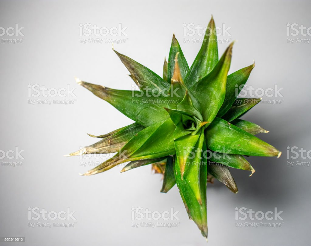 Top of fresh pineapple stock photo