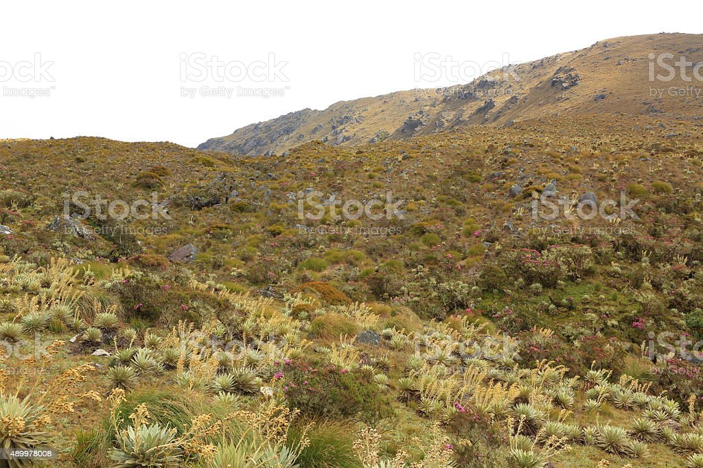 Top of Mountains in Tachira stock photo