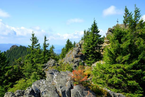 toppen av berget grosser osser i nationalparken bayerischer wald, tyskland. - bayerischer wald bildbanksfoton och bilder