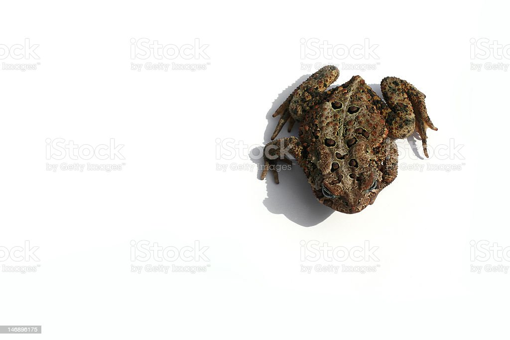 Top of Toad stock photo